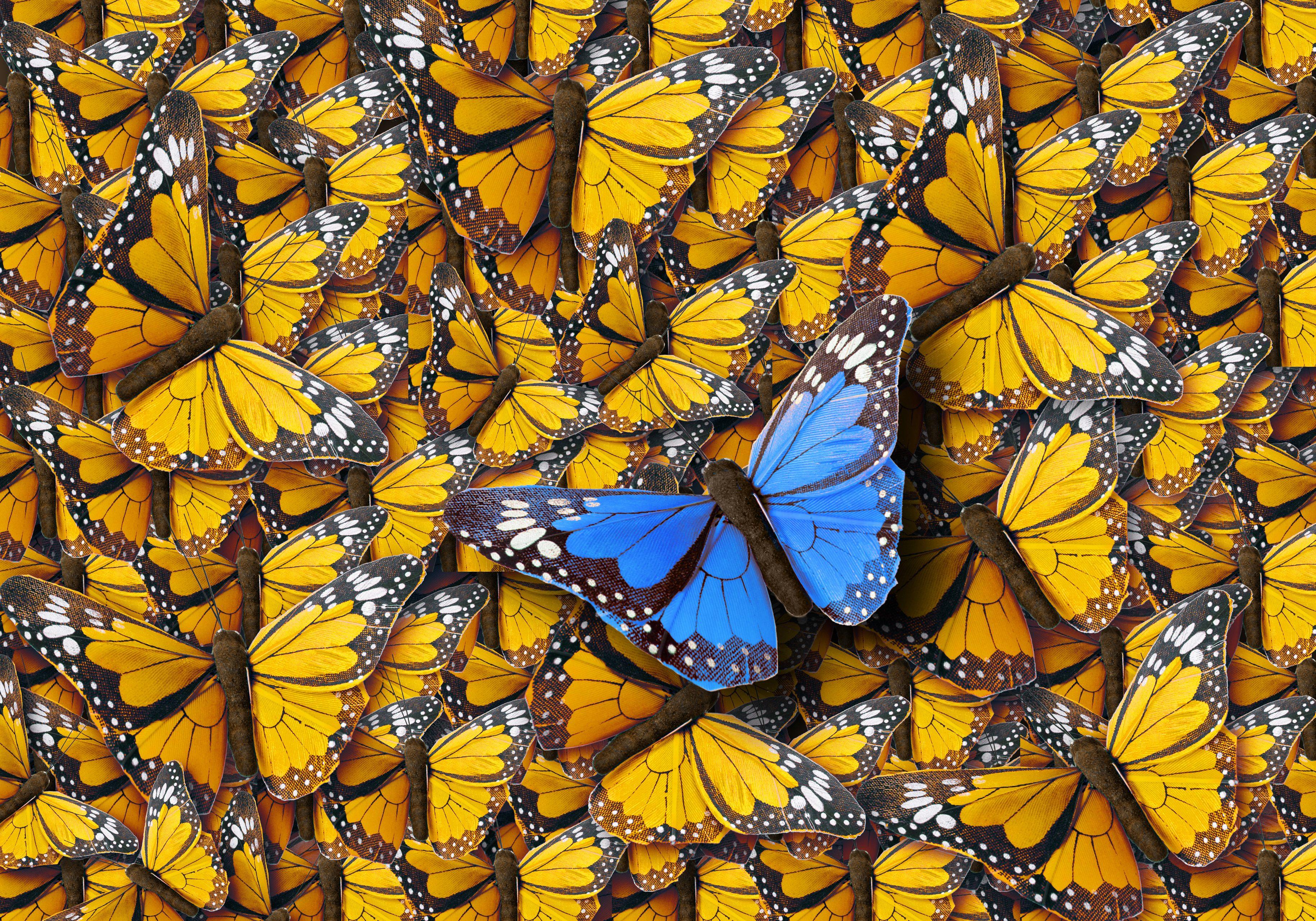 Background of Buterflies